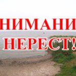 Внимание! Осенний нерест на озере Таватуй Невьянского района